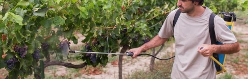Чем опрыскать виноград после цветения и в период завязи