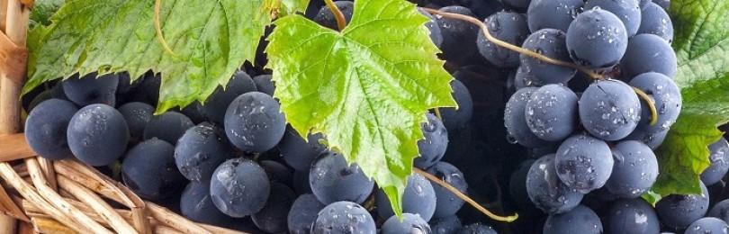 К чему относят виноград – к фруктам или ягодам?