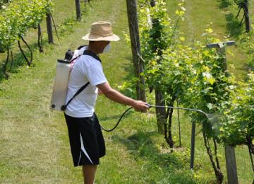 Бордосская смесь для обработки винограда