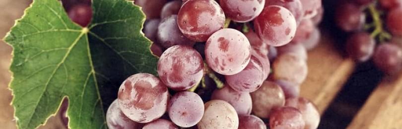 Видеть во сне виноград – к чему это?