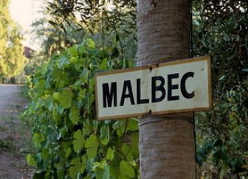 Мальбек