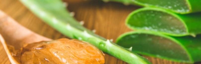 Алоэ с медом и кагором: рецепт настойки, ее польза для здоровья