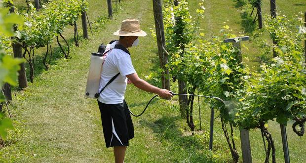 Бардосская смесь для обработки винограда