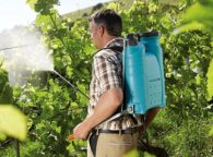 Чем и когда обрабатывать виноград
