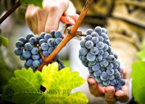 home-wine 3