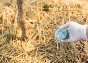 podkormka-vinograd 1