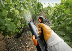 podkormka-vinograd 4