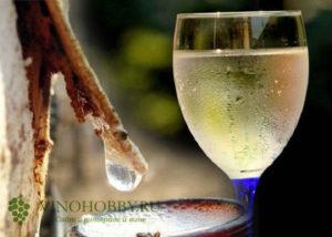 vino-iz-berezovogo-soka-5