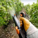 Применение фунгицида Строби для винограда