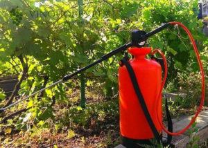 fungicid-strobi-dlya-vinograda 5