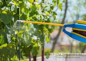 fungicid-strobi-dlya-vinograda 6