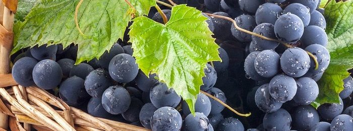 grapes-2