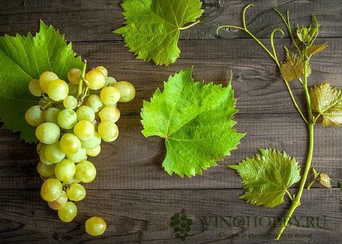 grapes-4