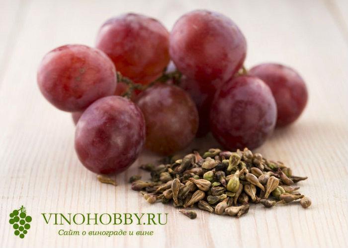 vinograd 5