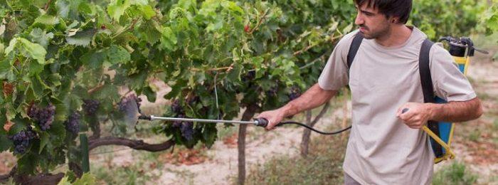 vinograd-obrabotka 2