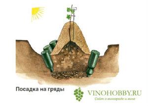 vinograd posadka 9