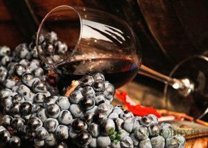 molodoe-vino 5