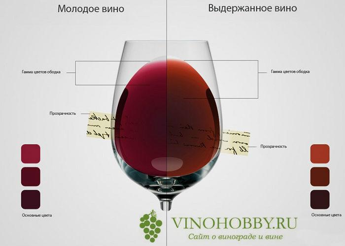 molodoe-vino 6