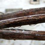 Оидиум винограда и меры борьбы