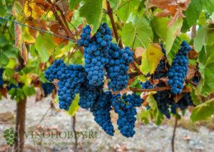 portugalskoe-zelenoe-vino 4