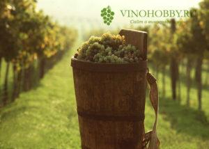 vengerskoe-vino 4