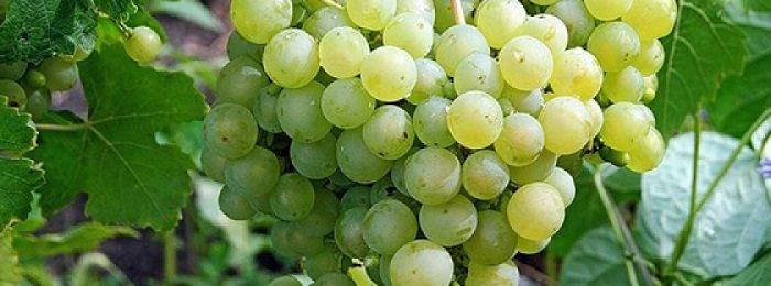 vinograd-aleshenkin 1