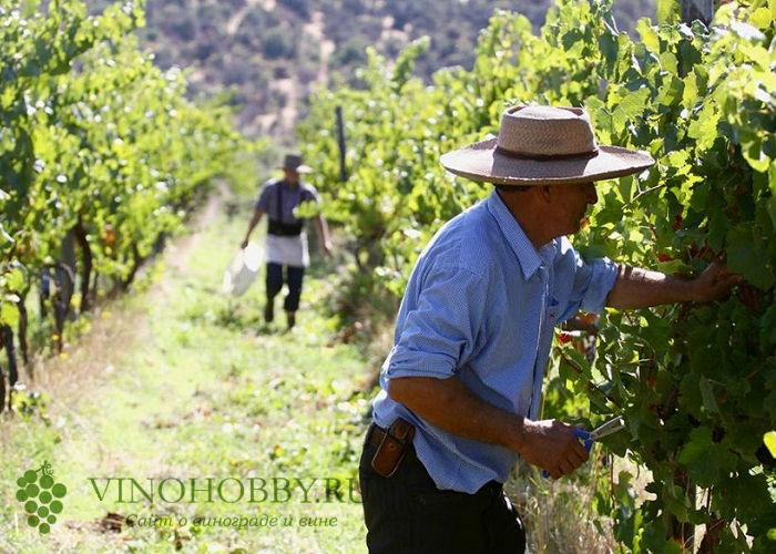 chilijskie-vina 16