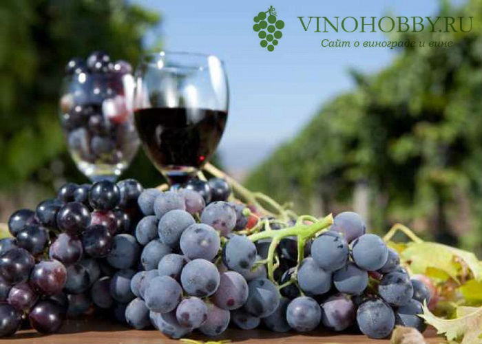 nalivka-iz-vinograda 3
