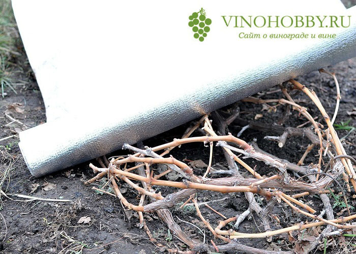 vinograd-na-zimu 6
